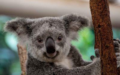 Bienvenidos al blog Koala